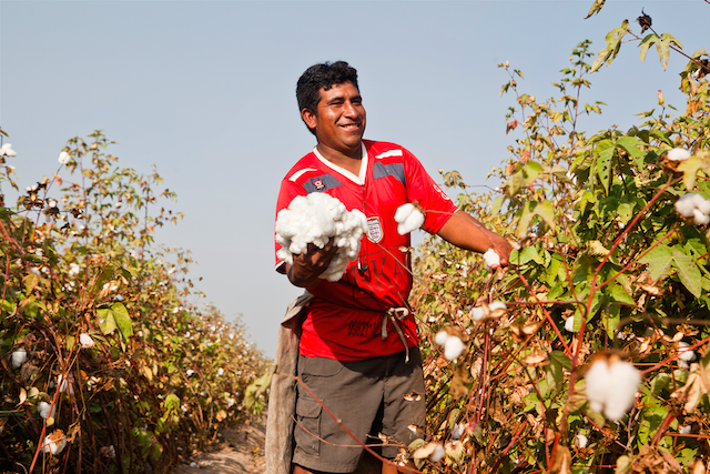 Vintisis cotton organico
