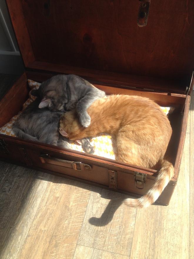 Romeow Cat Bistrot gatti