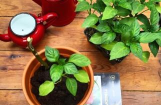 huerto rubano plantas