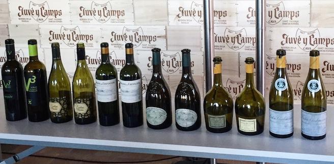vinos blancos cata magnificat 2016