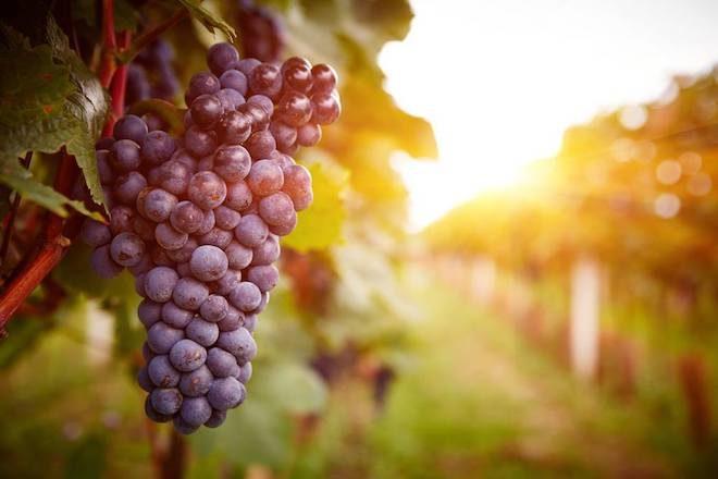 bano-de-vino-polifenoles-de-uva