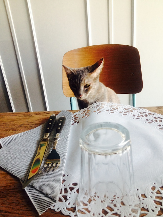 Romeow Cat Bistrot ristorante gatti