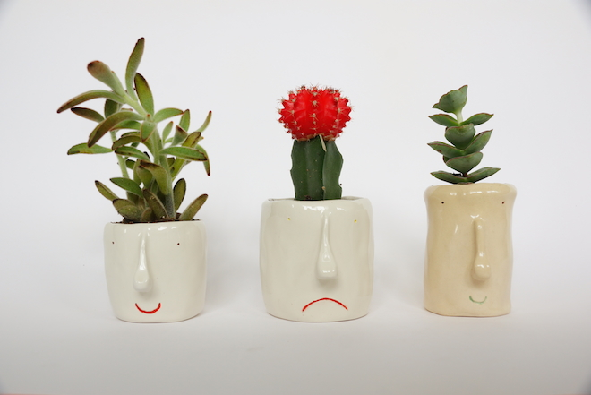 design room pompilio plants