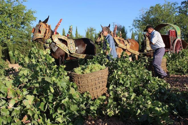 bodegas verum vino ecologico